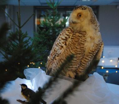 Joulu NOrssissa 201219 005
